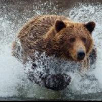 Running Bears